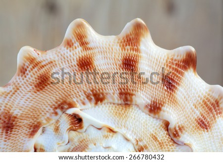 Sea shell, macro, selective focus - stock photo