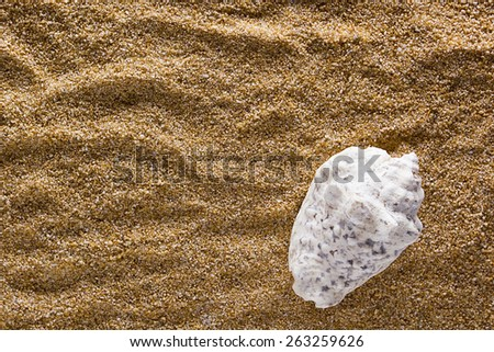 Sea shell on a background of sand. - stock photo