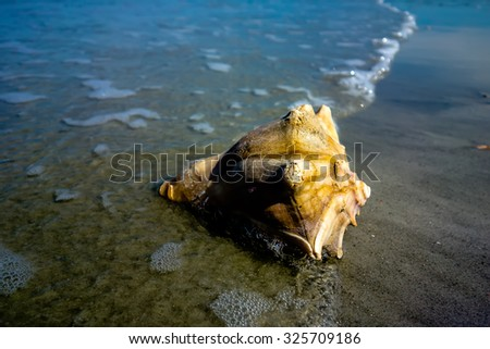 sea shell on a beach of atlantic ocean at sunset - stock photo