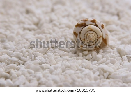 Sea shell on a white background - stock photo