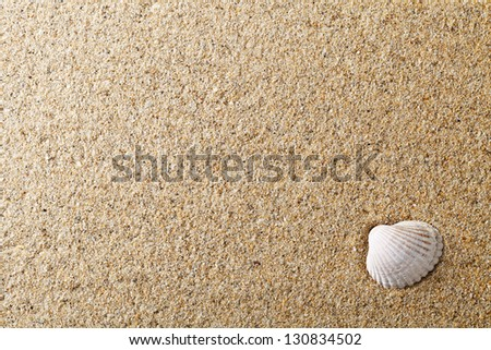 Sea shell on sand. Summer beach for background. Copy space - stock photo