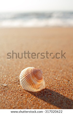 Sea shell on sandy beach with blurred background, copy space - stock photo