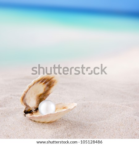 Sea shell on the beach - stock photo