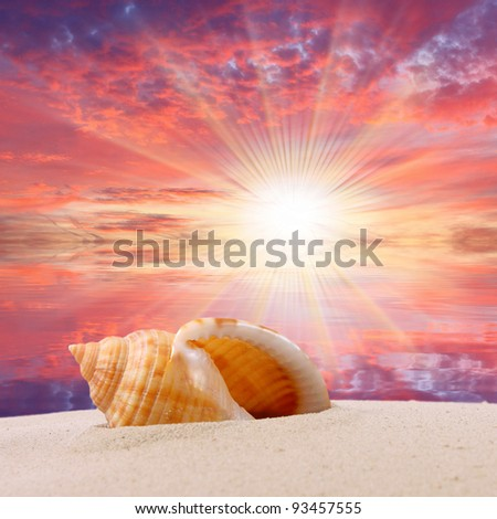 Sea shell on the beach and beautiful sunset over a tropical sea. Happy holidays concept. - stock photo