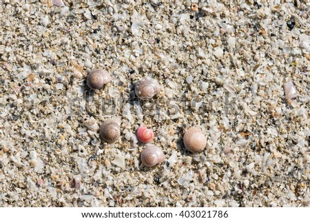 Sea shell on the beach. sand background