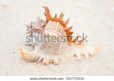 Sea shell on the shore - stock photo