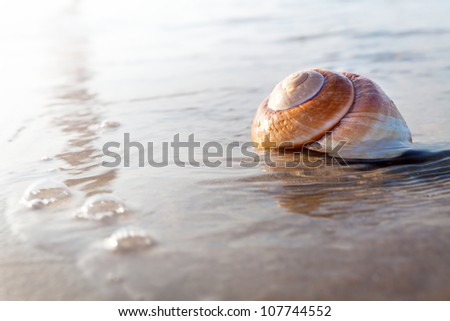 Sea shell surrounded by water on the sunny beach - stock photo