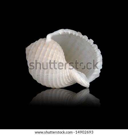 Sea shell with mirrored reflection against black background