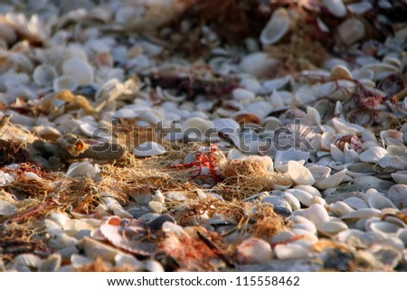 Sea Shells and Moss On Beautiful Sanibel Florida Beach - stock photo