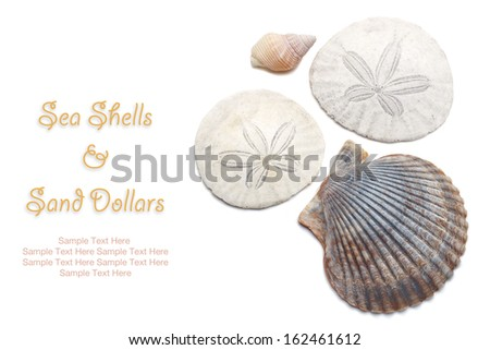 Sea Shells and Sand Dollars isolated on white with easy to remove sample text. Copy space included. - stock photo