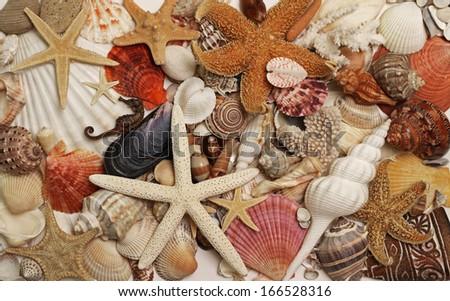 Sea shells and star fish exotic decorative design - stock photo