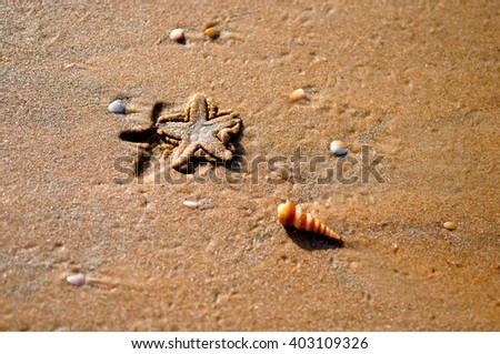 Sea shells and starfish on the sand. Summer beach background. Top view - stock photo