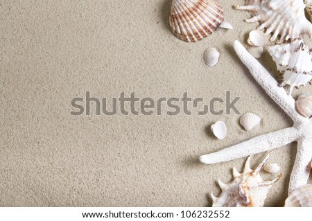 sea shells and starfish with sand as background