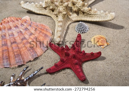 Sea shells and starfishes on sand as background - stock photo