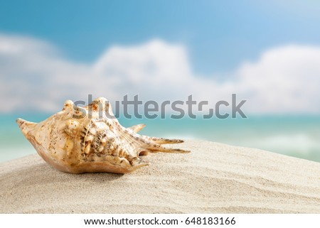 Shell On Sand Beach Blue Sky Stock Photo 552932587 Shutterstock