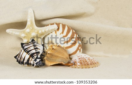 sea shells arranged as still life on canvas background - stock photo
