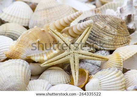 Sea shells background - stock photo