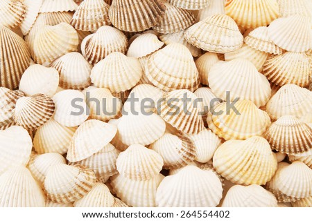stock-photo-sea-shells-background-264554