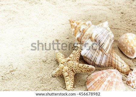 sea shells in the sand on the beach, concept for summer holiday at the seaside, copy space