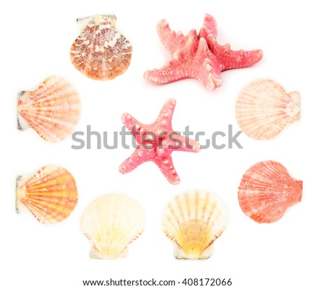 Sea shells isolated on a white, collage - stock photo