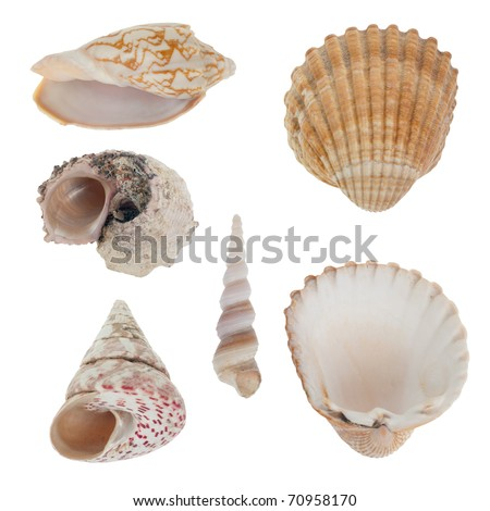 Sea shells isolated on white background. - stock photo