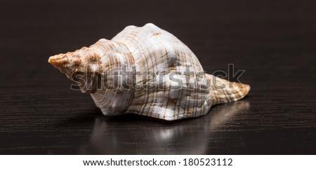 sea �¢??�¢??shells on a dark background - stock photo