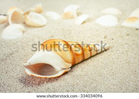 Sea shells on sand. Summer beach background.  - stock photo