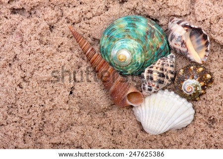 Sea shells on sand. Summer beach background. Top view - stock photo
