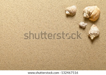 Sea shells on sandy beach. Summer background. Top view - stock photo