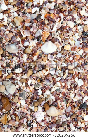 Sea shells on the beach sand.
