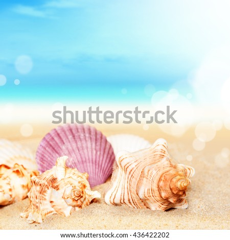 Sea shells on the sand at ocean background. Seashells. Summer beach. Summer concept. Summer time. - stock photo