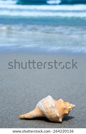Sea shells on the sand in the beach near sea, background
