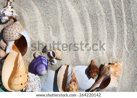 Sea shells on the sand in the beach near sea, background - stock photo