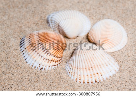 Sea shells  on the  sand, ocean mood  background, vacations wallpaper.  - stock photo
