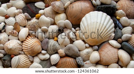 Sea Shells Seashells! - variety of sea shells from beach - panoramic - with large scallop shell. - stock photo