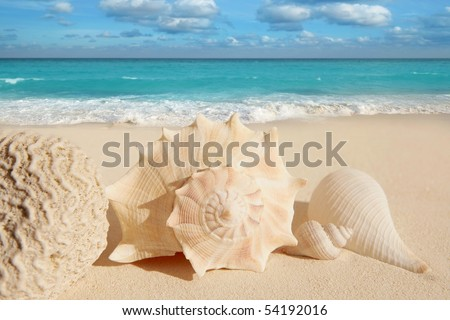 sea shells starfish on tropical sand turquoise caribbean summer vacation travel icon [Photo Illustration] - stock photo