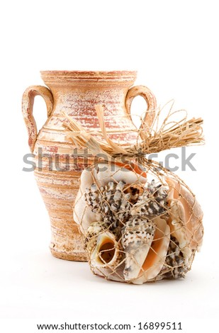 sea shells studio isolated