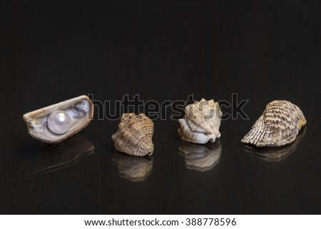 Sea shells with a pearl on the mirror wooden table - stock photo