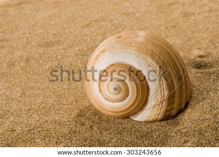 sea shells with sand as background, season specific