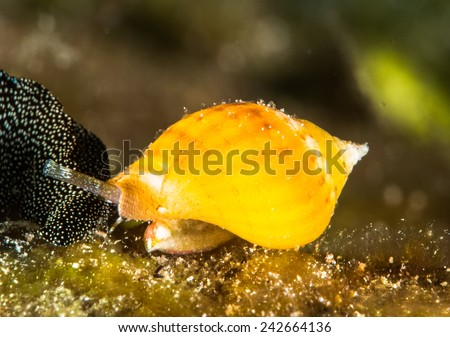 Sea snail - stock photo