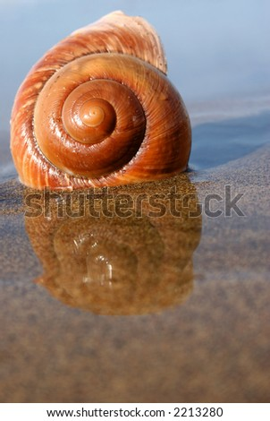 Sea snail on reflective sand at low tide - stock photo