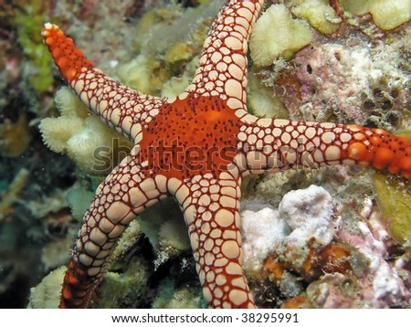 Sea star also called asteroid - stock photo