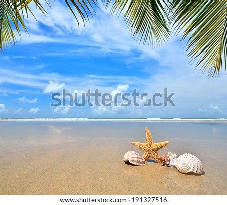 Sea star and conch shells on tropical beach  - stock photo