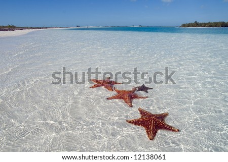 Sea star at the white sand bottom of the fine sea. Cuba Cayo Largo, tropical harbor on island