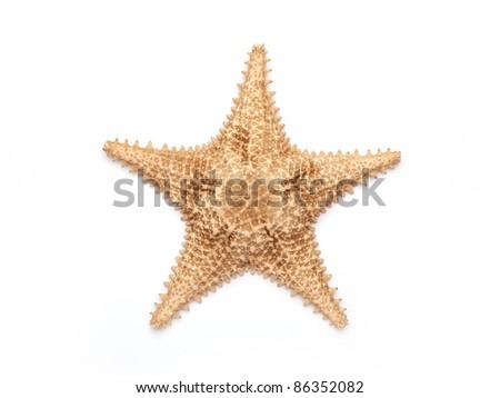 Sea star isolated on white - stock photo