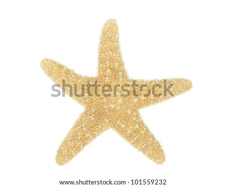 Sea star isolated over white background - stock photo