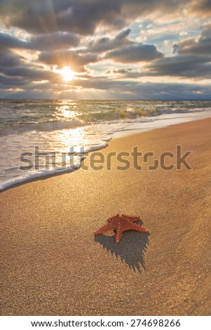 sea-star on sandy tropical beach against waves and cloudy sunset background - stock photo