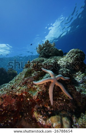 Sea star or starfish (linckia laevigata) on a coral reel with clouds and sky above, off Bunaken Island, North Sulawesi, Indonesia. - stock photo