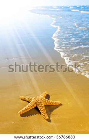 Sea Star or Starfish on an inviting beach - stock photo