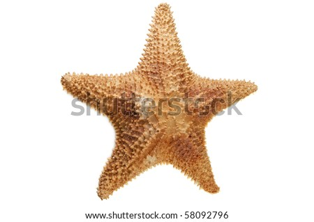 sea starfish isolated on white - stock photo
